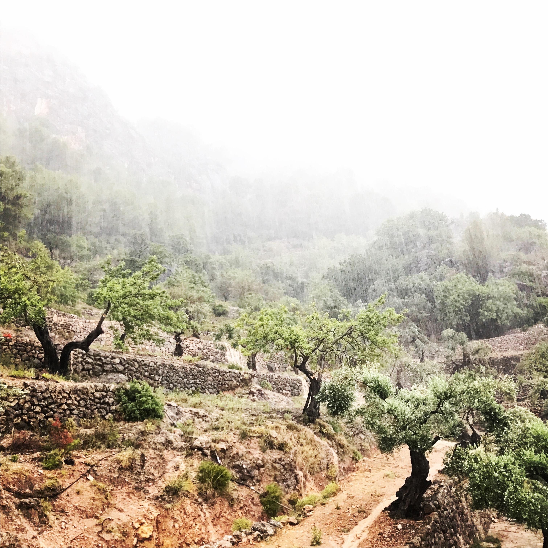 Finca Son Salas Olive Trees & Rain